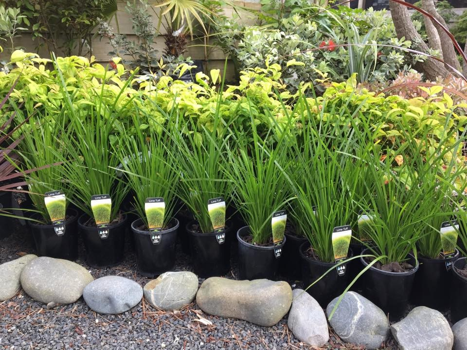 Mercury bay garden centre landscape supplies whitianga locally owned and operated whitianga garden centre if we dont stock the item you are looking for please ask our friendly team who will be happy to source workwithnaturefo