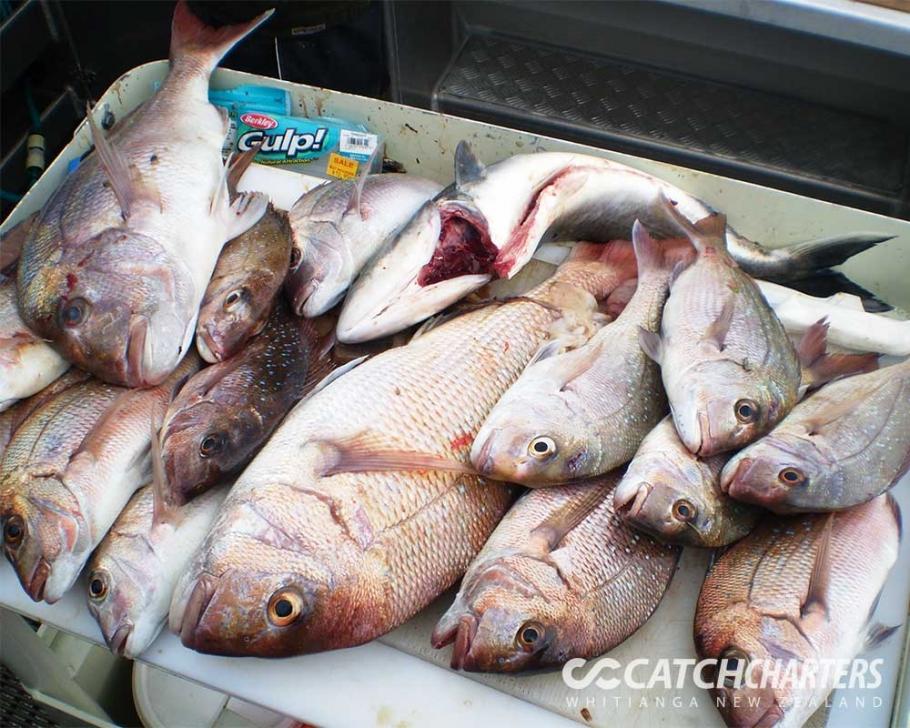 the catch fishing charters whitianga nz the catch fishing charters whitianga nz