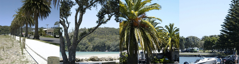 The Palms Whitianga