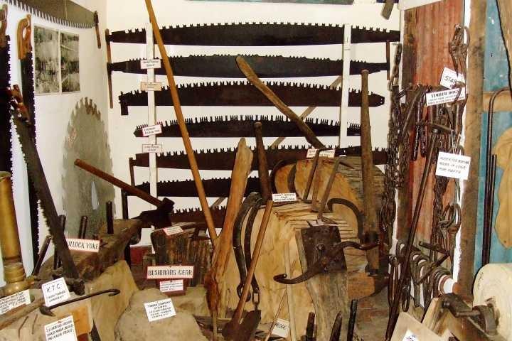 Kauri logs and hand saws