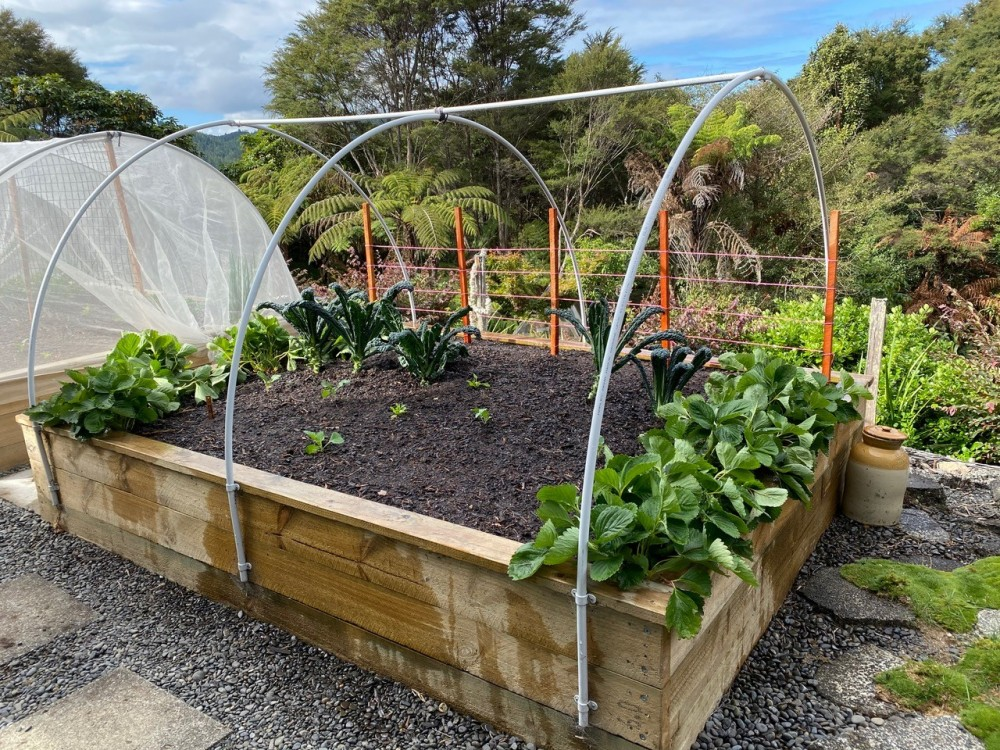 Raised vegetable garden with vegetables, cover and frame
