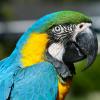 Macaws at Mill Creek Park