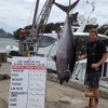 Mercury Bay Game Fishing club weigh in Whitianga wharf