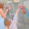 Feeding the Birds at Mill Creek Bird Park