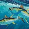 Fish souvenir placemats