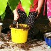 Outdoor planting fun at Peanuts Childcare Centre