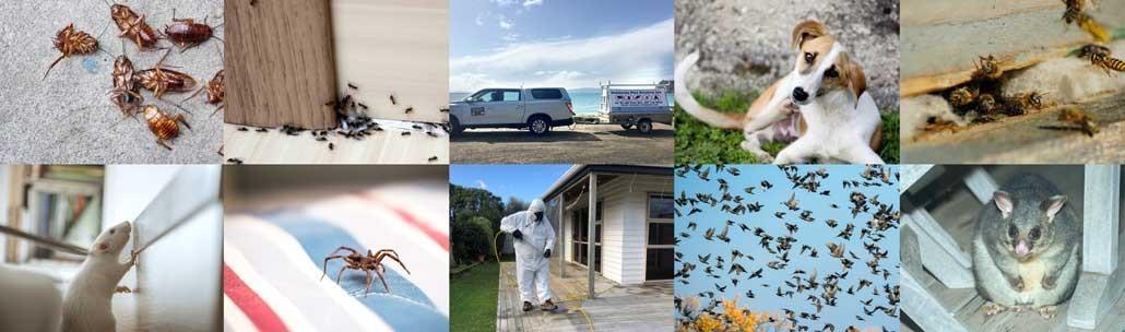 Peninsula Pest Services