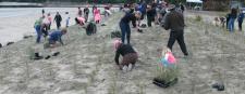 Cooks Beachcare Group
