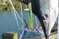 Mercury Bay Game Fishing Club big catch whitianga
