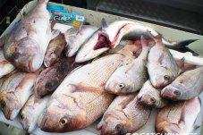 the-catch-fishing-charters-whitianga-nz