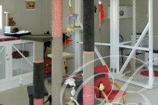 Cat toys at Bella Cattery Whitianga