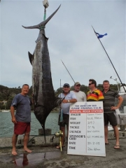 Blue Marlin Caught in the BILLFISH CLASSIC TOURNAMENT MERCURY BAY GAME FISHING CLUB