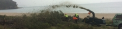tree chipping cooks beach .jpg