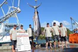Mercury Bay Game Fishing Club Whitianga tournament