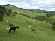 Rangihau Ranch Coroglen