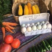 Fresh eggs Coroglen Farmers Market Coromandel Peninsula