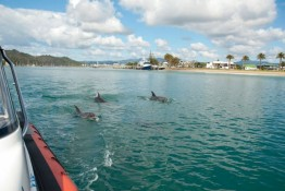 Dolphins at entrance to Whitianga Harbour