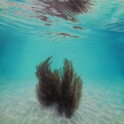 Submerge Jacqueline Elly works Bread and Butter Gallery Whitianga