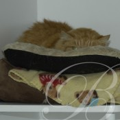 A place to snooze at Bella Cattery Whitianga