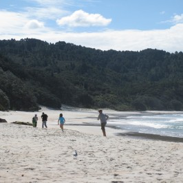 New Chum Beach, Coromandel, NZ