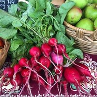 Raddishes for sale Coroglen Farmers Market Coromandel Peninsula