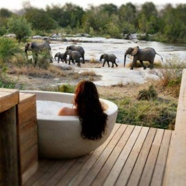 Woman in bath with Elephants