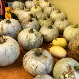 pumpkins coroglen farmers market.jpg