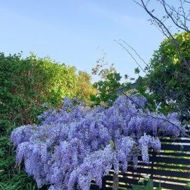 Gardenscapes Whitianga