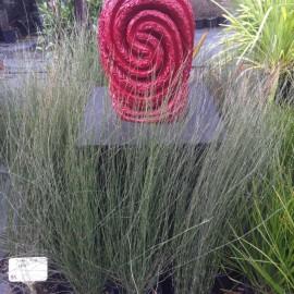 W.A.N.T – Waitaia Nursery & Garden Centre