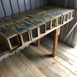 Rat Traps lined up on bench
