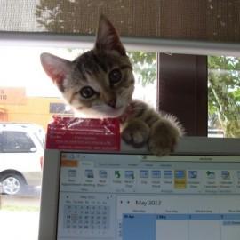 Peanut the Mercury Bay library cat at Whitianga