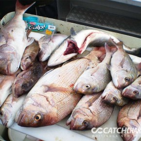 Pile of snapper