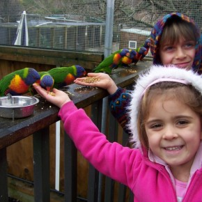 Feeding the birds at Mill Creek Park