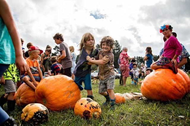 Kuaotunu Pumpkin and Harvest Festival