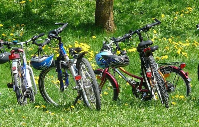 Four bikes lined up in grass