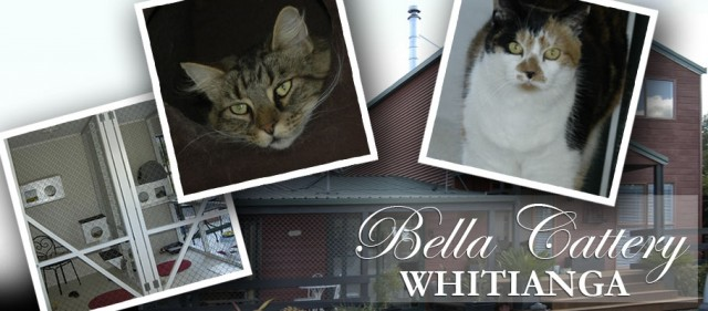 Bella Cattery