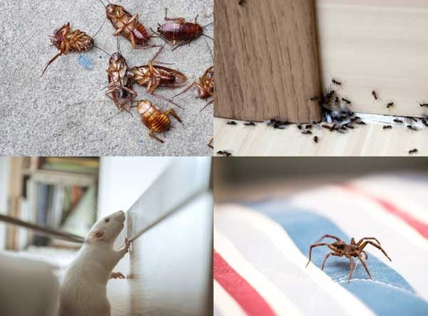 Peninsula Pest Services