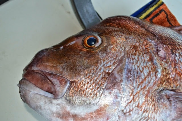 Snapper Tournament - whitianga