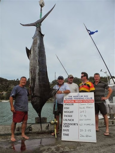 Blue Marlin Caught in the BILLFISH CLASSIC TOURNAMENT MERCURY BAY GAME FISHING CLUB