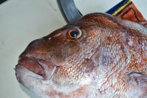 Tristram Marine Mercury Bay Open Fishing Tournament Whitianga 2014