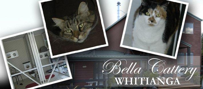 Bella Cattery Whitianga