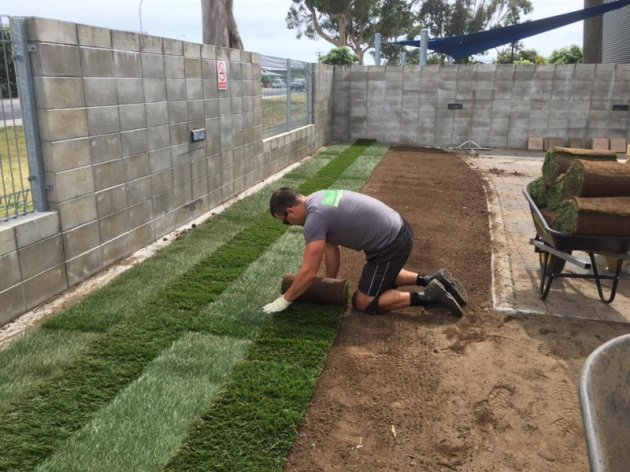 Coromandel Ready lawns