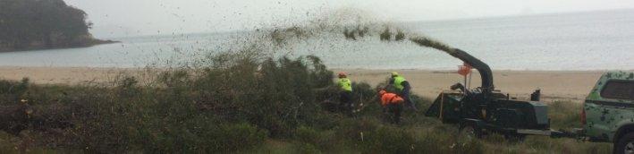 tree chipping cooks beach .jpg